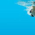 Najpopularniejsze style pływackie #2